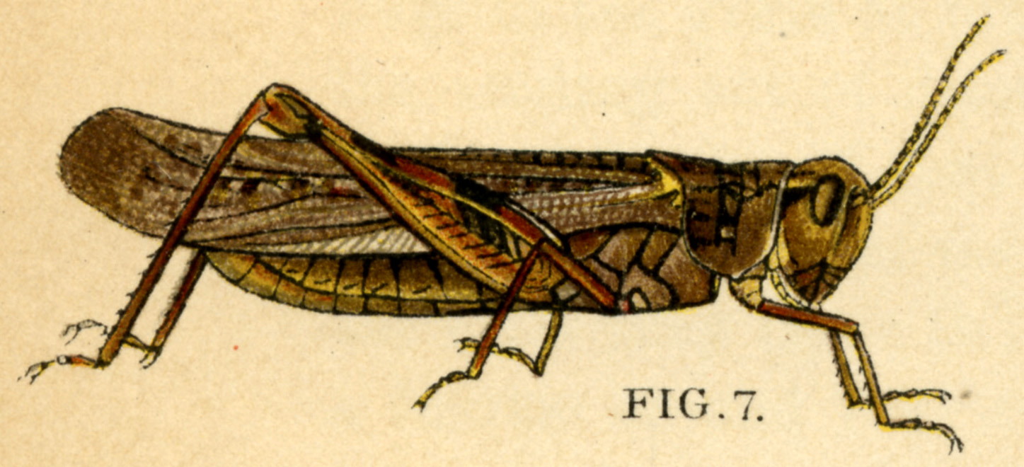 City Of Locusts Pdf